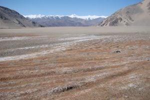 A degraded pasture in Tsokar, Ladakh