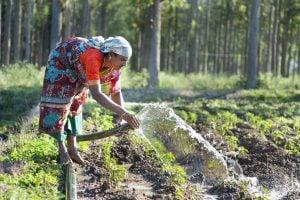 Female farmer irrigates crops, Tamil Nadu, India. Image source: WMI Flickr Photos