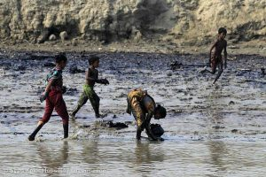 Oil spill cleaning Operations in the Bangladesh Sundarbans, 2014 (© Syed Zakir Hossain / Greenpeace)