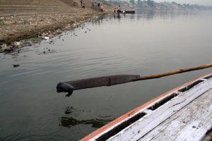 A boatman dips his oar into the Ganga at Varanasi, and up comes the black sludge (Image by Ruhi Kandhari)