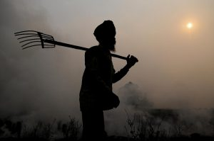 Burning of rice residues in south-east Punjab, India, prior to the wheat season.  (Courtesy of Neil Palmer (CIAT).