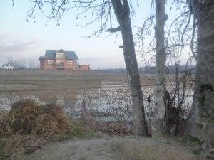 Buildings are replacing crops in Kashmir's farmlands