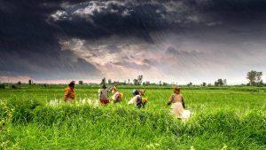 Climate change will lead to yield shocks [image by Rajarshi Mitra]