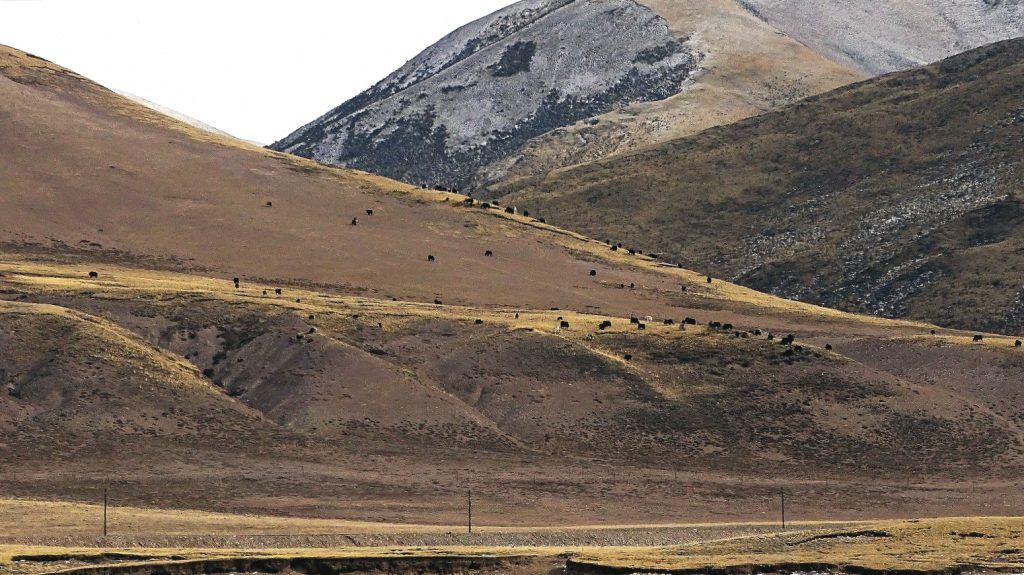 Grassland degeneration in Sanjiangyuan.