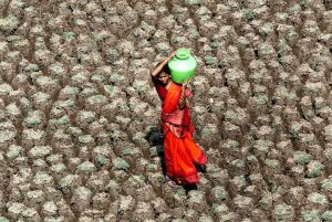 A woman carries home a pot of water, while taking a shortcut across the dry bed of the Usmansagar lake, in Andhra Pradesh [image by Sherwin Crasto / American Center, Mumbai]