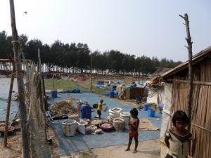 Fish being dried on a Sagar beach facing the Bay of Bengal [image by Soumya Sarkar]