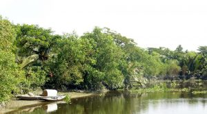 Part of newly developed mangrove forest along the Chitra river in Katakhali village under Mulghar union of Bagerhat [image by: Sheikh Hedayet Ullah]