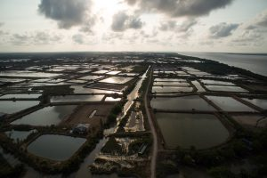 Aerial view of the Mekong Delta often referred to as the rice bowl of Vietnam [image by: Gareth Bright]