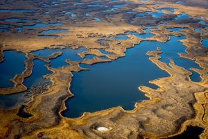 The upper delta of the Ili River in Almaty region [image by: Gregory Bedenko]
