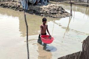 A young boy working in a mud crab farm in Joymonigola village [image by by: Soumya Sarkar]