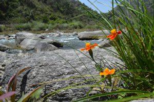 The Tenga river valley in Arunachal Pradesh, one of the world's last unexplored biodiversity hotspots (All photos by Chandan Kumar Duarah)