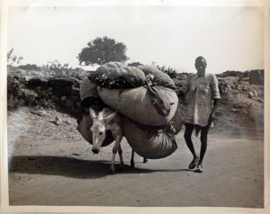 A vintage photograph of a man using a donkey to transport goods [image via: Smithsonian Institution/Wikipedia]