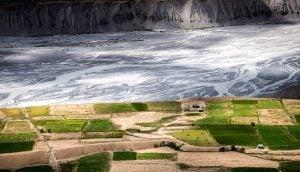 Pea fields along Spiti River near Rangrik village in Himachal Pradesh [image by: Shailendra Yashwant]