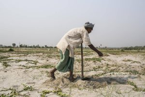 In Sunsari, Nepal, close to the border with India, a farmer cultivates land that was submerged in sand during the Koshi flood of 2008 [image by Nabin Baral]