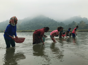Fishing for riverweedin the Ou river. (Image by the author)