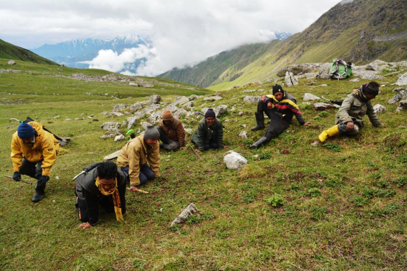 Himalayan viagra, Harvesting of caterpillar fungus in Askot in Uttarakhand state, Western Himalayas (Photo by Muzamil Ahmad)