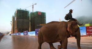 man riding an elephant in China
