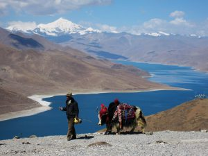 A Tibetan with his yak at Yamdrok Lake [image by: ccdoh1/Flickr]