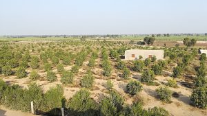 Reducing water use in agriculture is key for Pakistan, a country facing severe water shortages. (Photo: Hasan Abdullah)