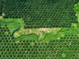 A palm oil plantation in the Solomon Islands (Image: Alamy)