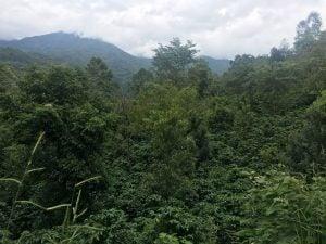Sustainable, shade-grown coffee in Ai Ni Coffee Farm, Yunnan, China
