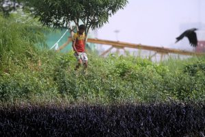 A week after the oil spill, the grass, shrubs and small trees are still coated with oil on the banks of the Karnaphuli river.  This photo was taken on October 31, 2019.  [image by: Mohammad Minhaj Uddin]