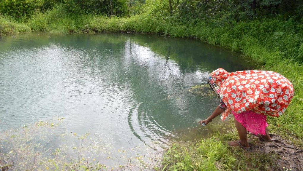 farmer reaches into pond water. Rainwater harvesting and farm ponds play a big role in climate-smart farming [image by: Swayam Shikshan Prayog]