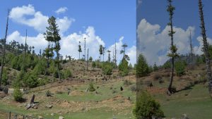 Part of a degraded forest in north Kashmir's Bandipora district (Photo --- Athar Parvaiz)