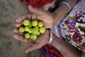 An old woman holds the fruit of the initiative in her hands [image by: Manoj Genani]