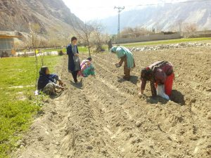 Preparation of field for gladiolus sowing time [image by: Rozina Baber]