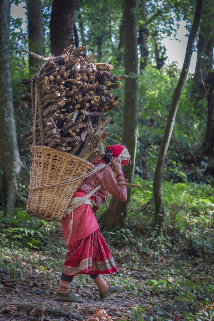 Woman carrying large stack of wood on her back for use as heat energy. Women bear a disproportionate burden [image courtesy: ICIMOD]