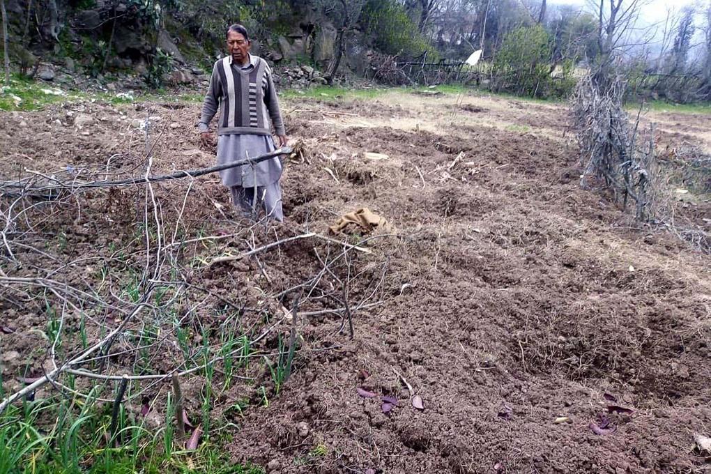 ایبٹ آباد ضلع کے نتھیاگیلی کے علاقے بکوٹ میں ایک کسان جنگلی سؤر کے ریوڑ سے تباہ ہونے والے اپنے کھیت میں کھڑا ہے -( تصویر بشکریہ عدیل سعید )