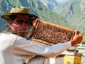 Beekeepers are producing honey in the traditional way beside the dusty road up to Babusar Pass [image: Alamy]