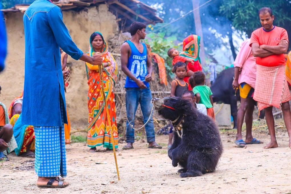 छुड़ाये जाने से पहले धुथारु [image courtesy: Laxmi Prasad Ngakhusi]