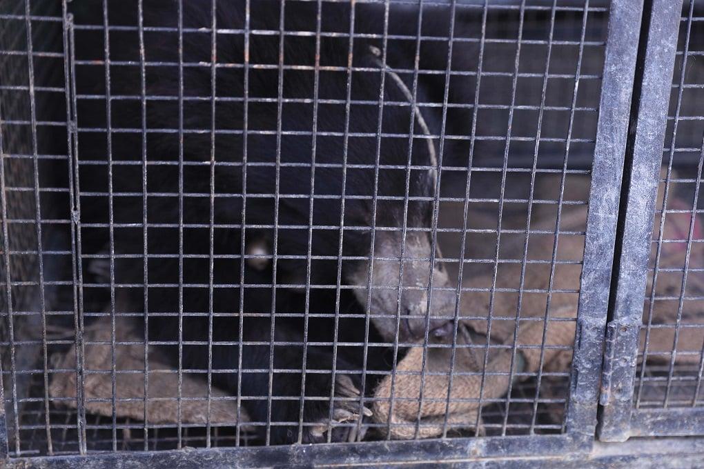 एक छोटे से पिंजड़े में कैद [image courtesy: Laxmi Prasad Ngakhusi]