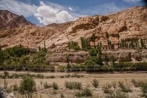 Poplar trees, Ladakh. Image source: Chetan Karkhanis