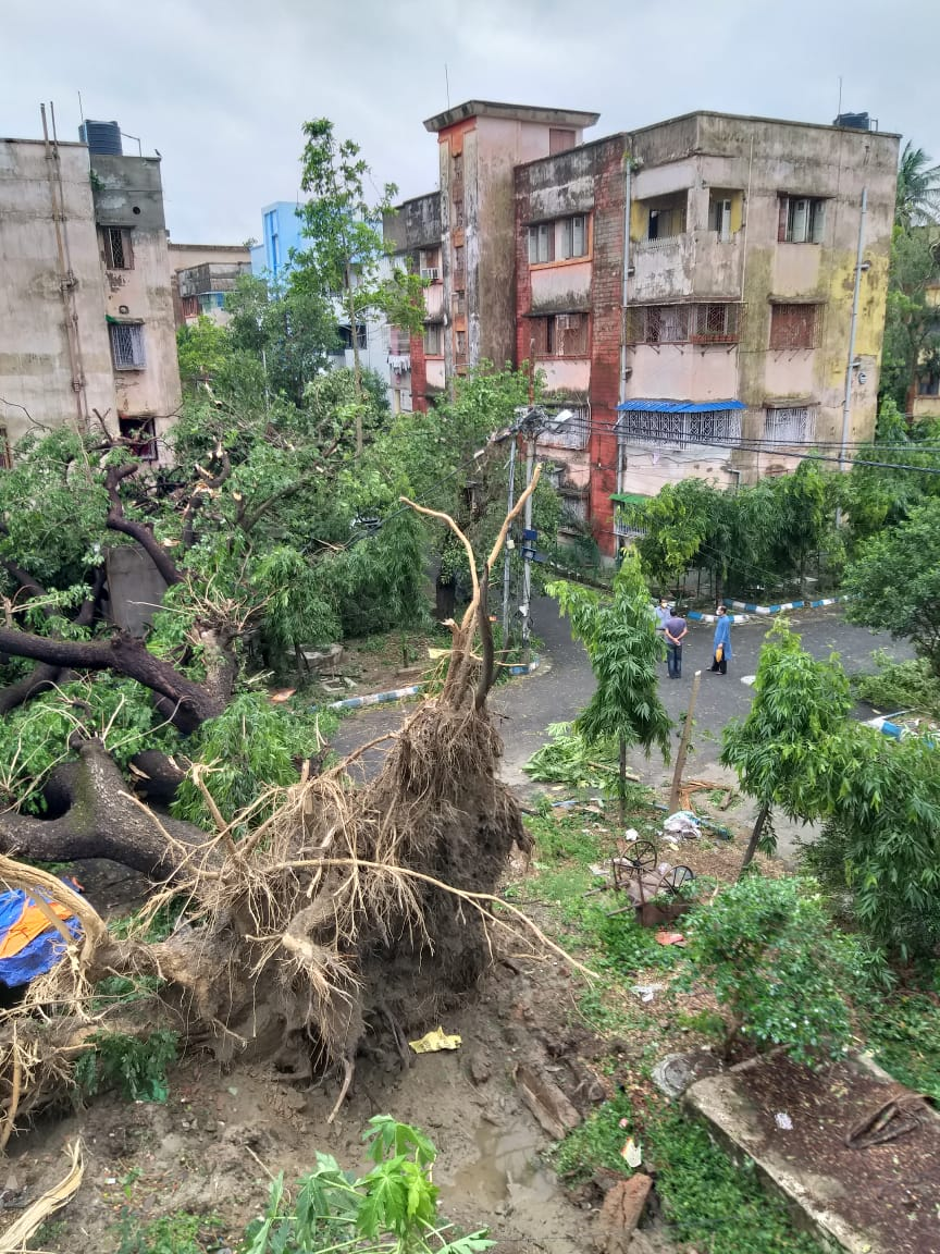 cyclone amphan aftermath. Massive trees uprooted by tremendous winds