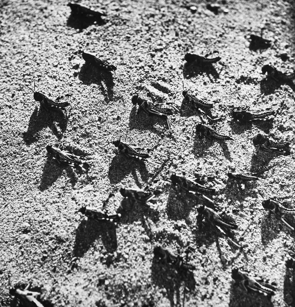 सन् १९५२ मा पाकिस्तानमा देखिएका सलह । (फोटोः अलामी)