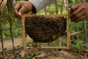 Nitul Bhuyan shows off his swarm of honeybees [image by: Kasturi Das]