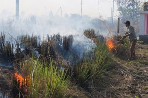 Man burning crops in South Asia