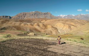 A woman waters a dry field in preparation for a grain crop in Spiti Valley, Himachal Pradesh [image by: Daniel J Rao/Alamy]