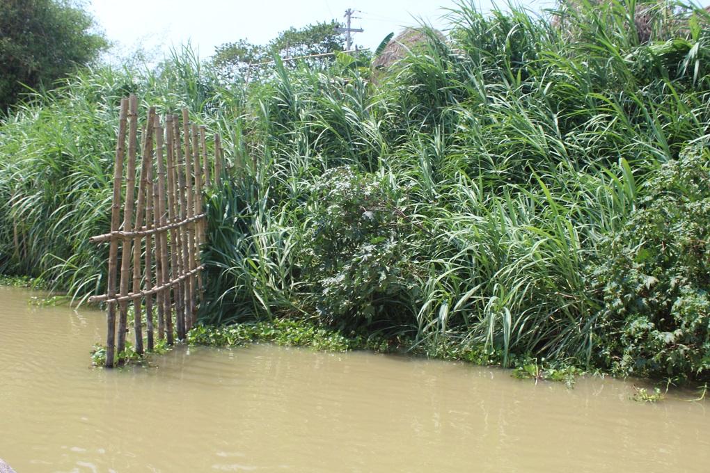 जिंजीराम में जगह-जगह बांस के बाड़ देखने को मिल जाएंगे [image by: Munir Hossain]