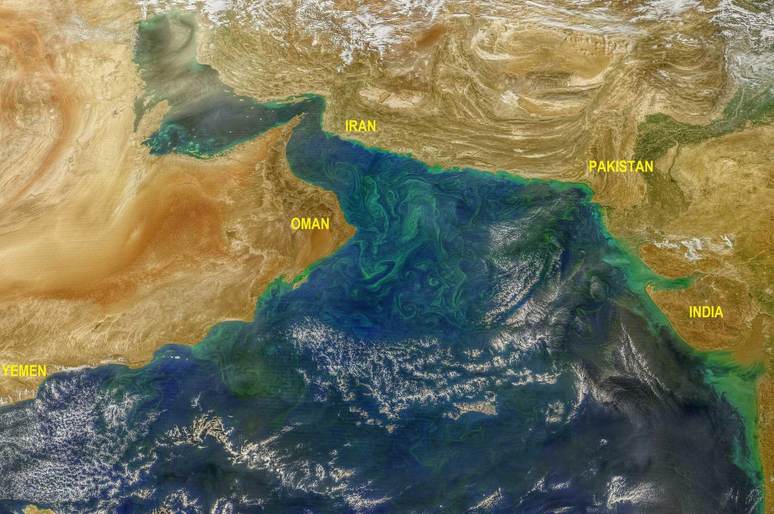 Algae blooms in the Arabian Sea