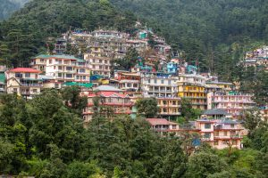 Colorful houses and a green pine forest in Himalaya mountains in Dharamsala, India. Pine wood and houses on background
