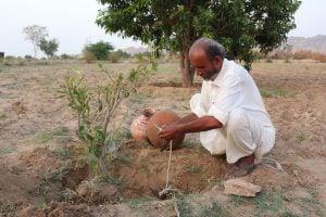 Allahrakhio Khoso pitcher irrigation, Zulfiqar Khoso