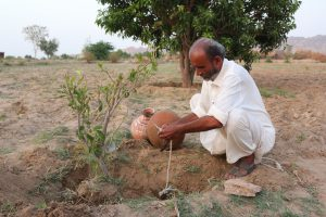 Allahrakhio Khoso, a farmer in the Thar desert, has found a water-efficient way to grow crops [image by: Zulfiqar Khoso]