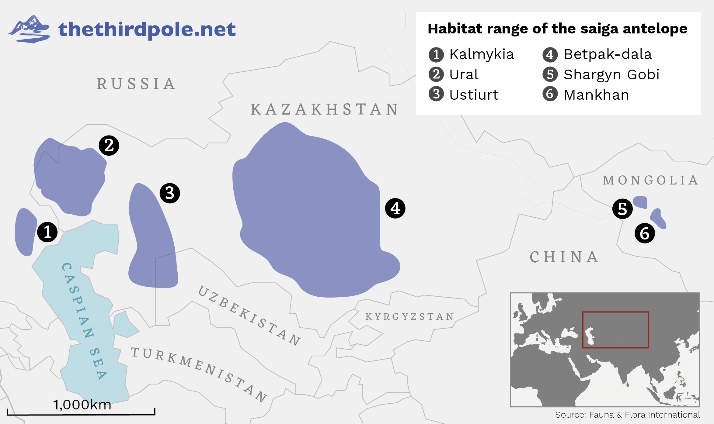Habitat range of the saiga antelope