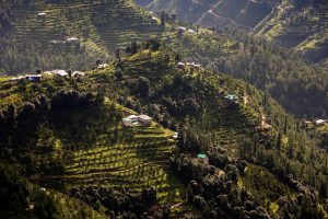 Terraced apple orchards in Shimla, Himachal Pradesh. Climate change means fruit is appearing earlier in the year [image by: travelib india/Alamy Stock Photo]