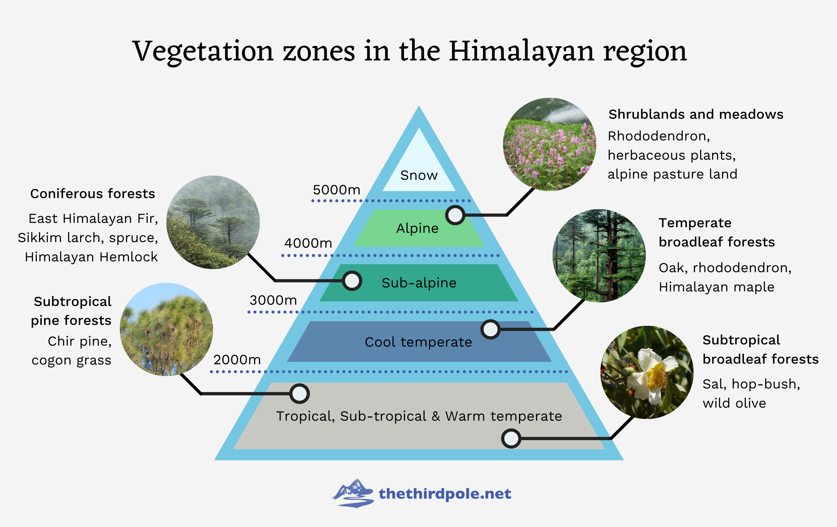 Vegetation zones in the Himalayas