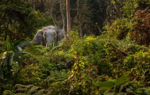 The nature conservation sector is projected to grow 4-6% per year compared with less than 1% for agriculture, timber and fisheries. The protected forest in Kaziranga, Assam, India (pictured here), generates significant revenue and employment [image: Alamy]